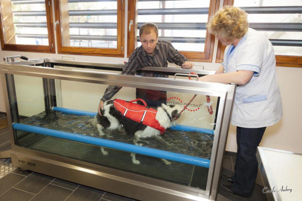 Physiothérapie d'un chien