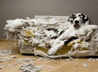 Troubles comportementaux chien