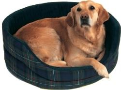 Vieux chien dans son panier